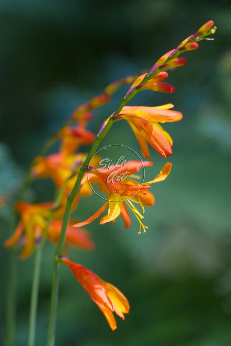 """""""Summer flower"""" stock image"""