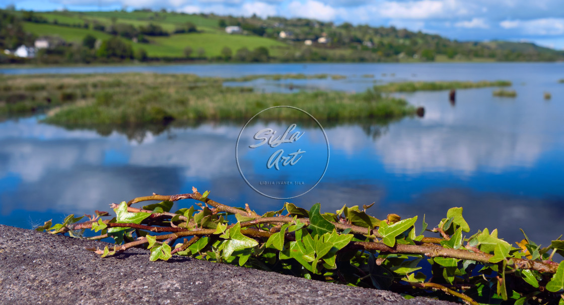 """""""Ivy near the water edge"""" stock image"""
