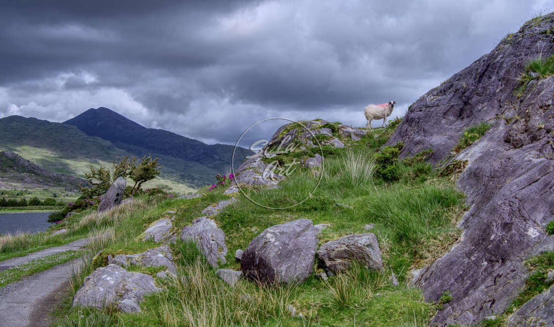 """""""Rural road, mountains and a sheep"""" stock image"""