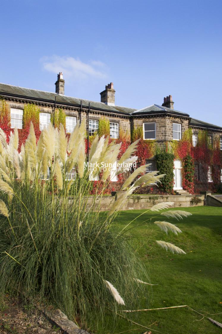 """Pampas Grass at Conyngham Hall Knaresborough North Yorkshire England"" stock image"