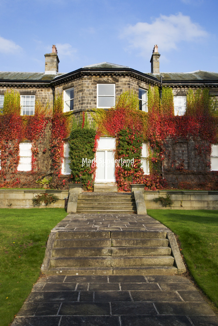 """Virginia Creeper on Conyngham Hall Knaresborough North Yorkshire England"" stock image"