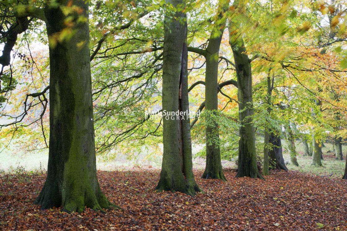 """""""Autumn Trees and Fallen Leaves in Jacob Smith Park"""" stock image"""
