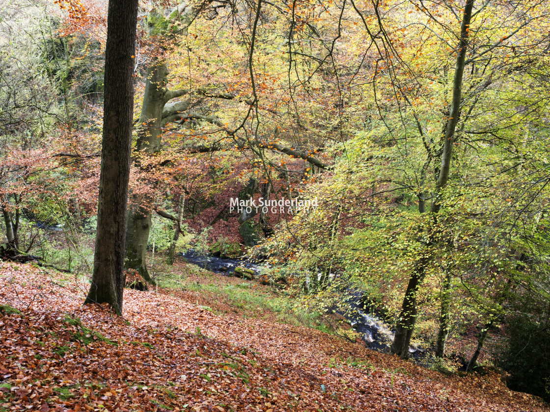"""Fosse Gill in Skrikes Wood near Pateley Bridge"" stock image"