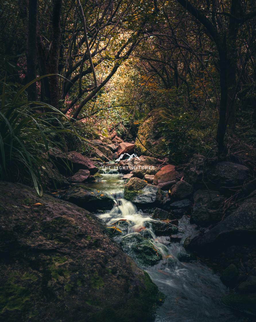 """Enchanted Stream"" stock image"