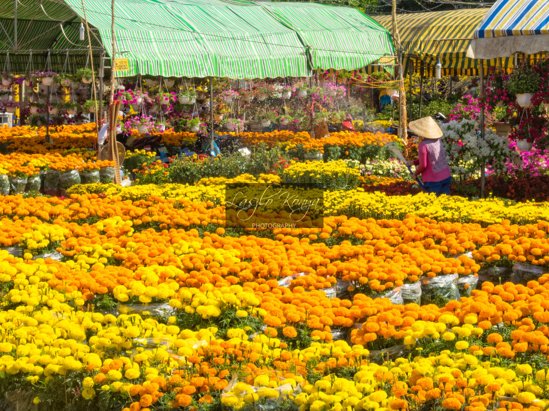 """Chrysanthemum on the market - Cho An Binh"" stock image"