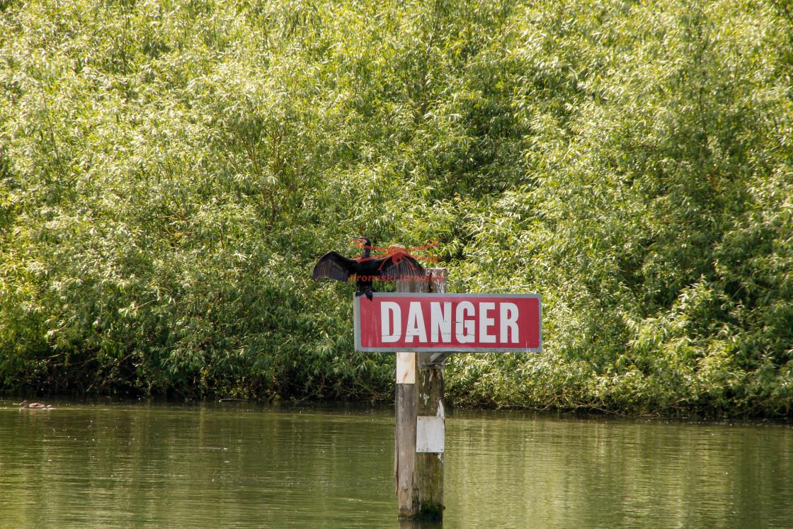 """Danger Cormorant bird"" stock image"