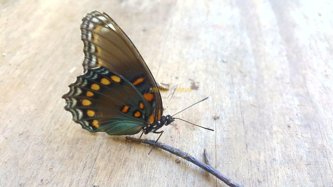 """Little Butterfly"" stock image"