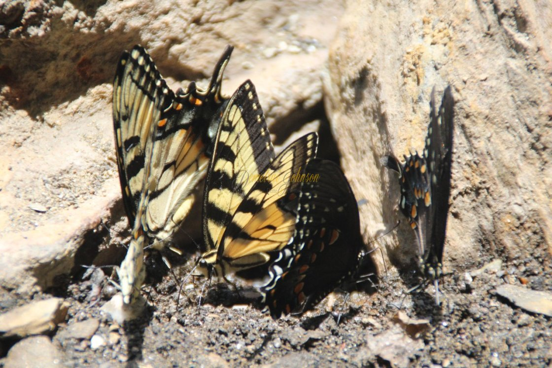 """""""Butterfly Reunion"""" stock image"""