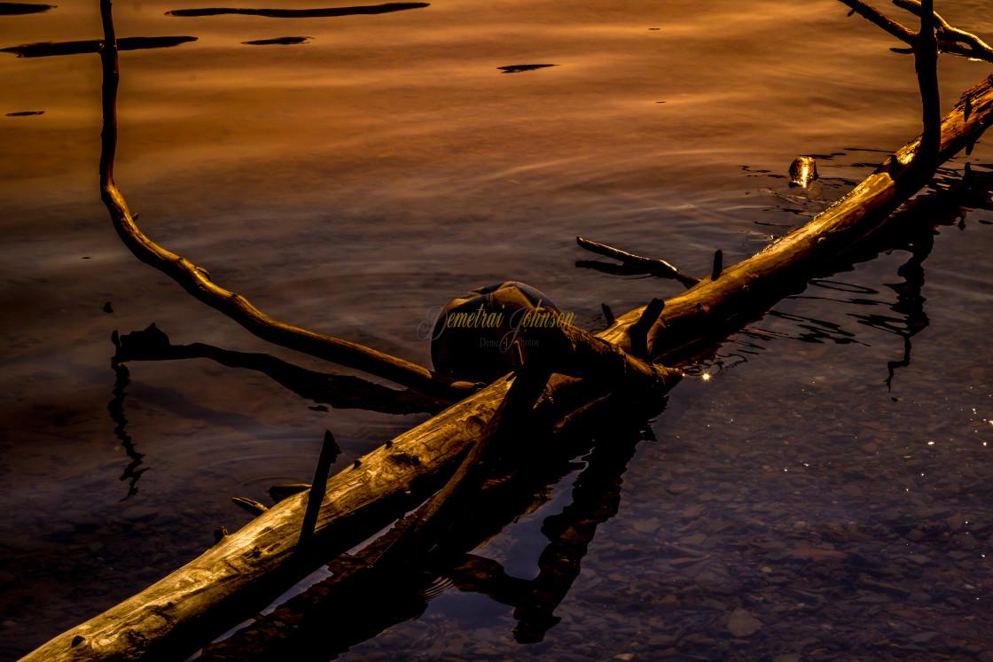 """Companion of a Fallen Tree"" stock image"