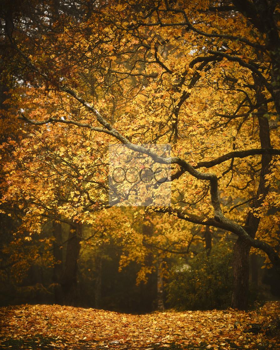 """Fallen leaves"" stock image"