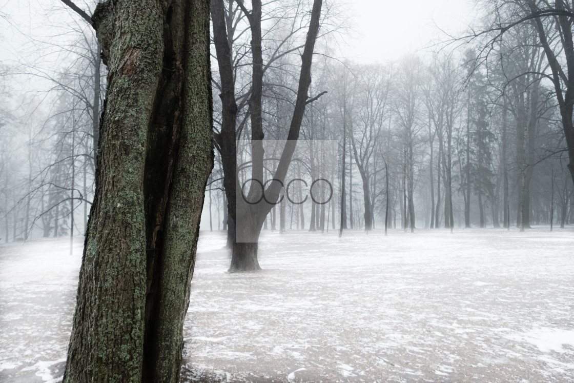 """Winter park"" stock image"