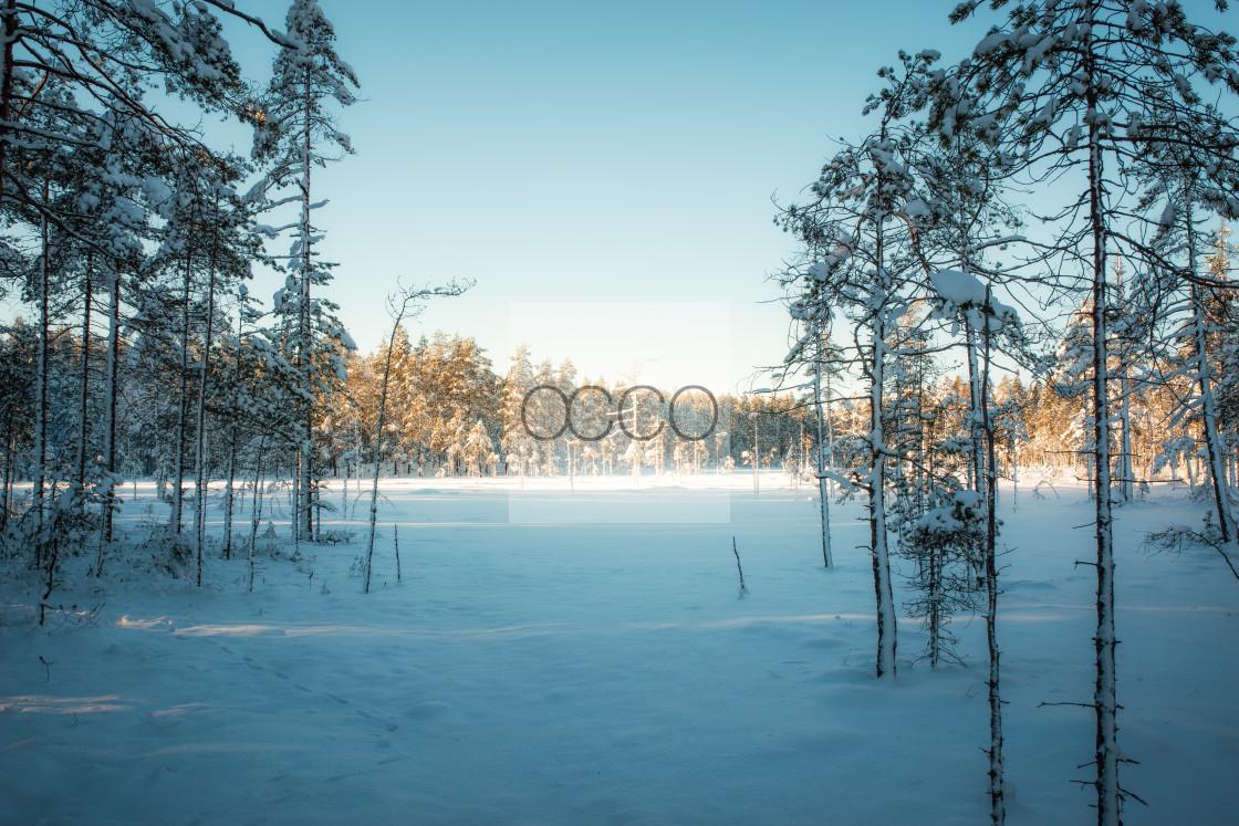"""""""Frozen swamp"""" stock image"""