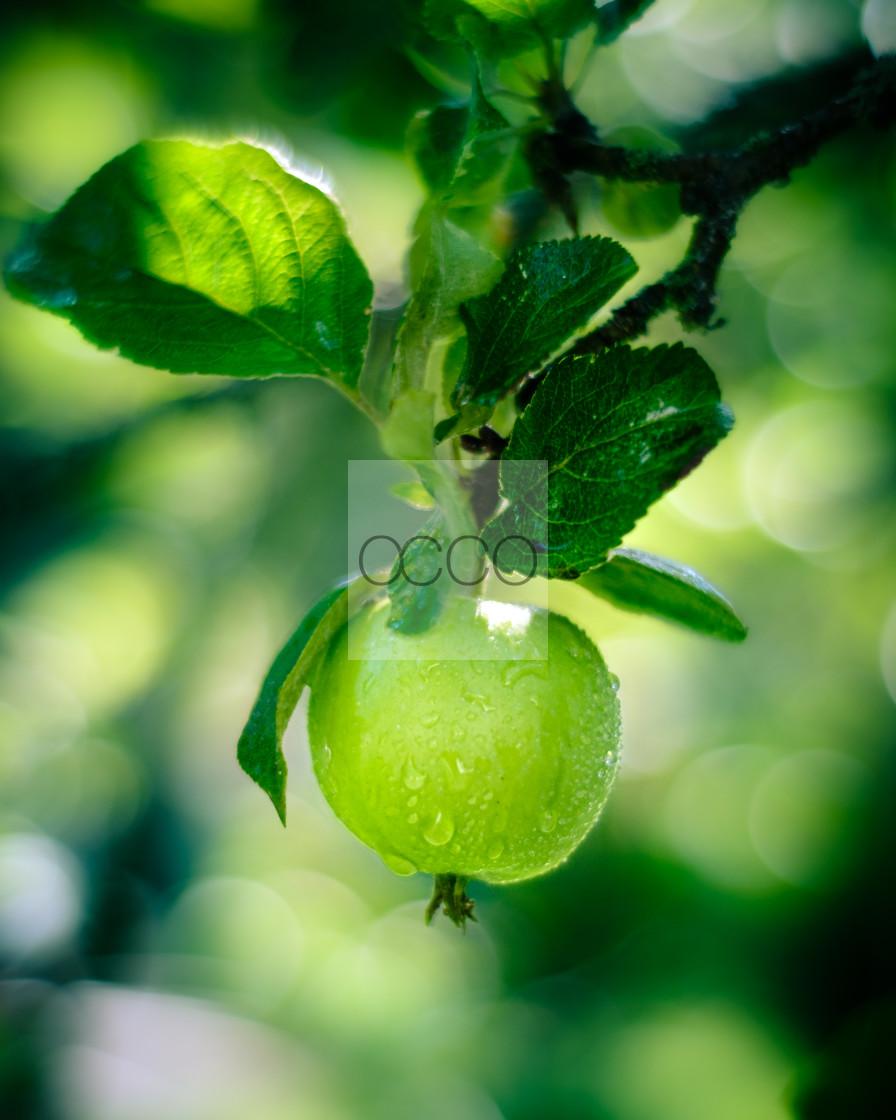 """Fresh apple"" stock image"