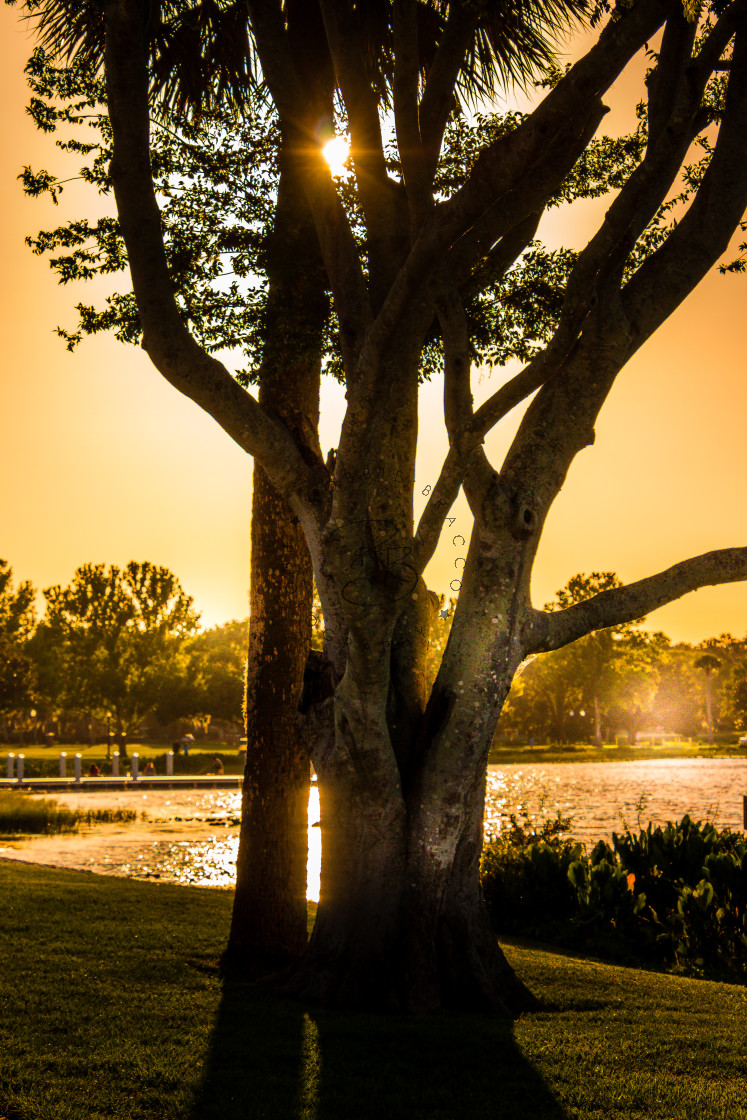 """""""AT SUNSET ON THE BRACCO TREE AND LIGHTING THE SURROUNDING AREA"""" stock image"""