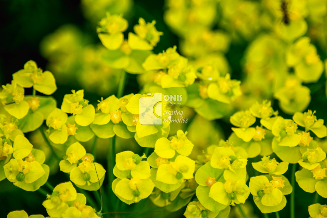 """Small Flowers"" stock image"