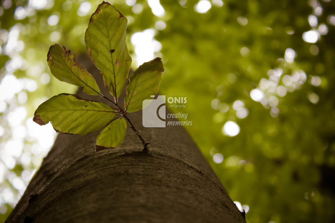 """""""New Branch"""" stock image"""