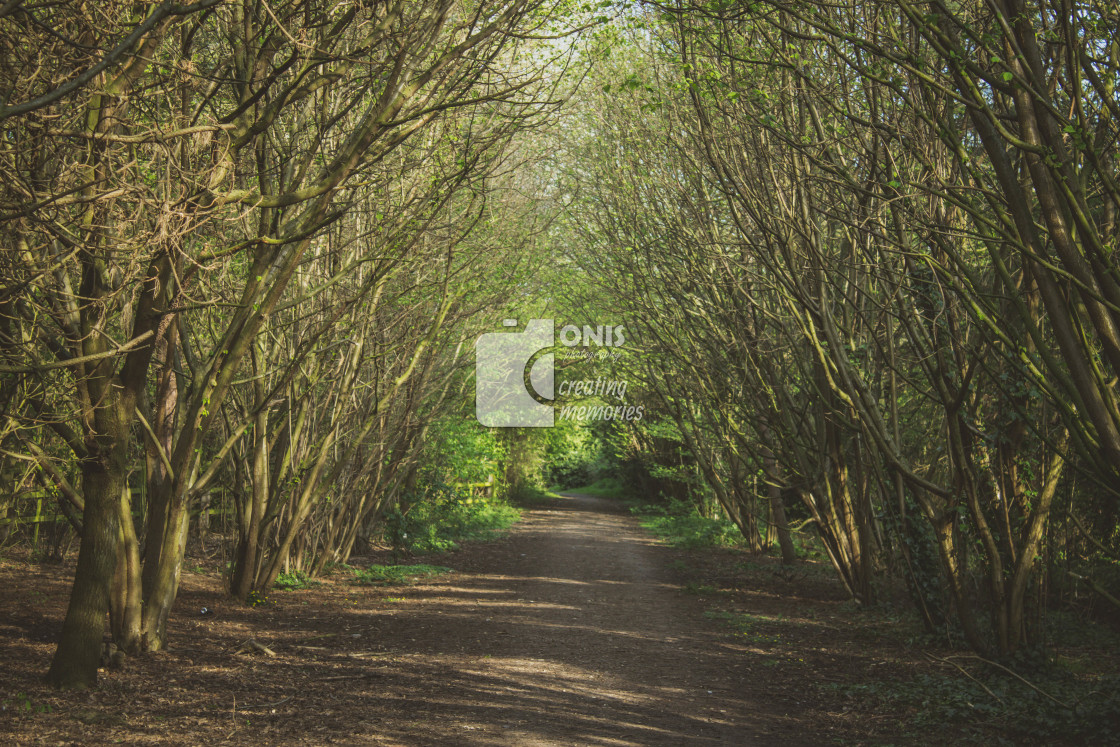 """""""Trees Tunnel"""" stock image"""
