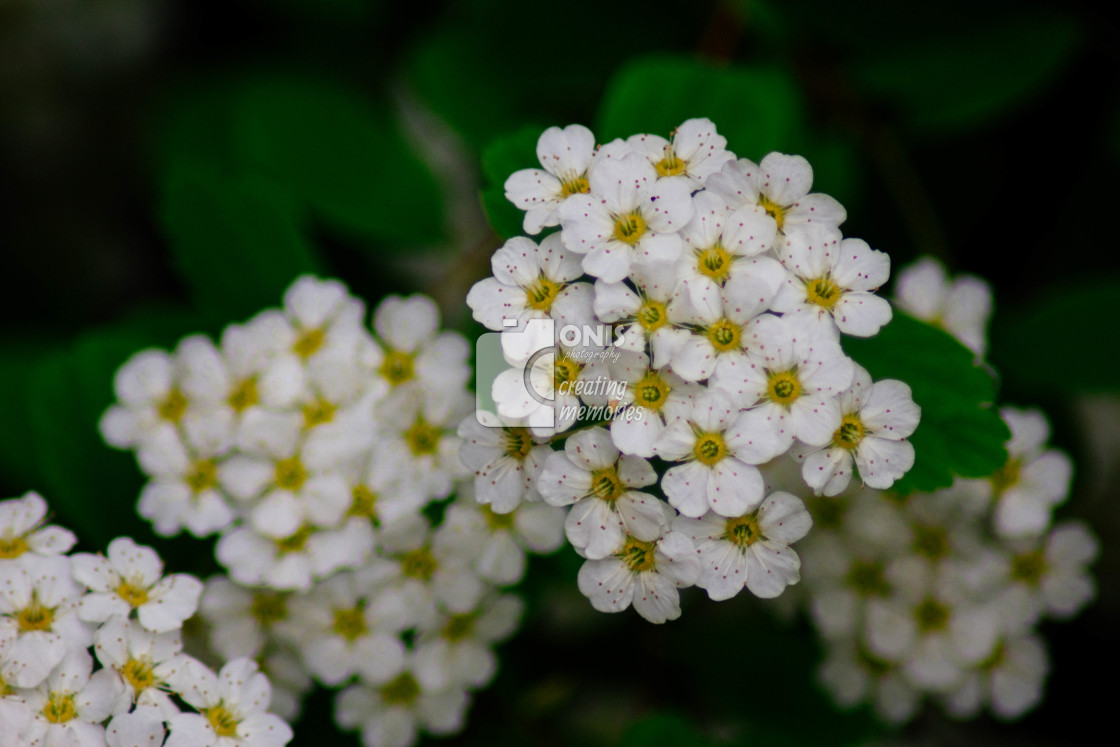 """""""Small Flowers"""" stock image"""