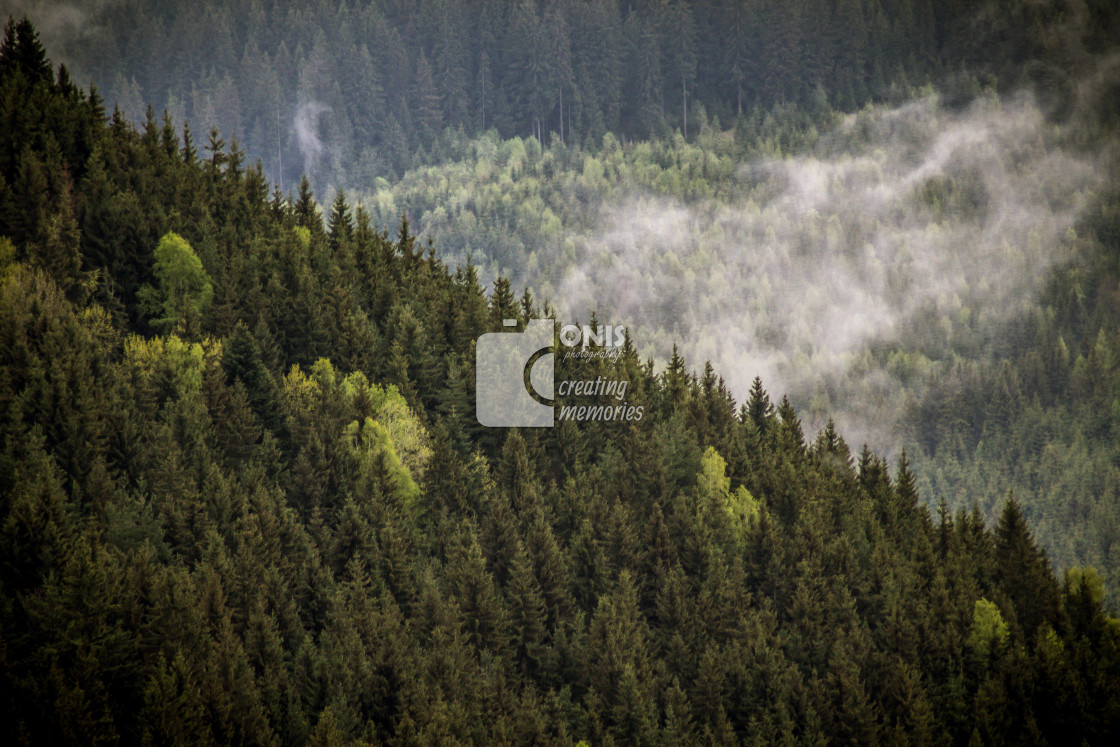 """""""Lots of Trees"""" stock image"""