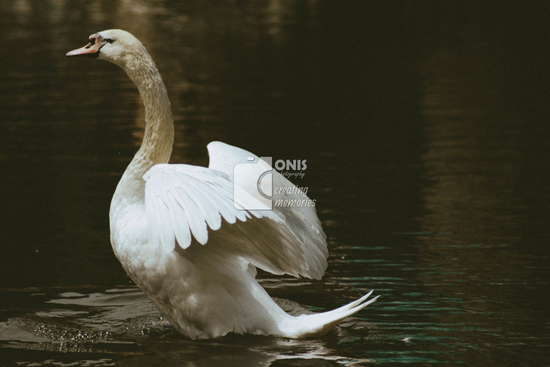 """""""Ready to Fly"""" stock image"""