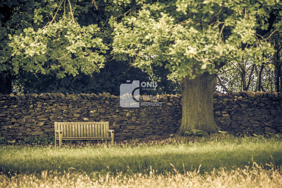 """""""Bench and Tree"""" stock image"""