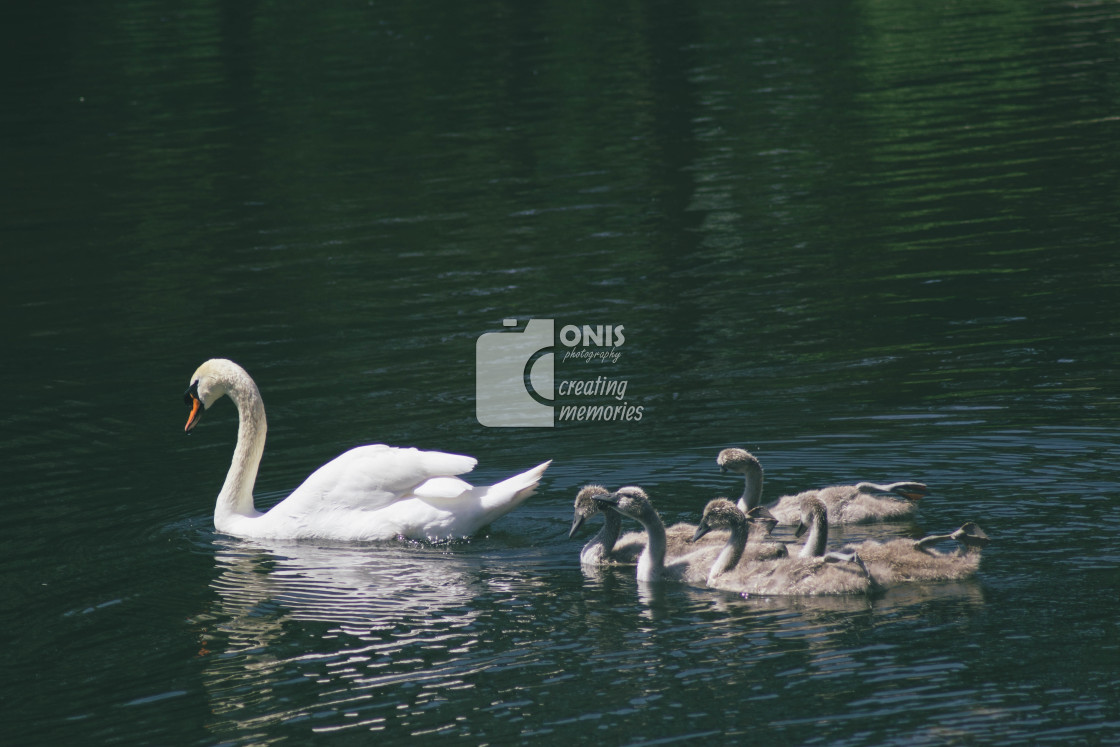 """""""Mother Goose"""" stock image"""