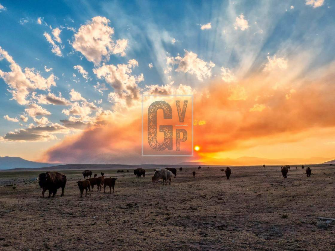 """""""Buffalo Sunrise"""" stock image"""