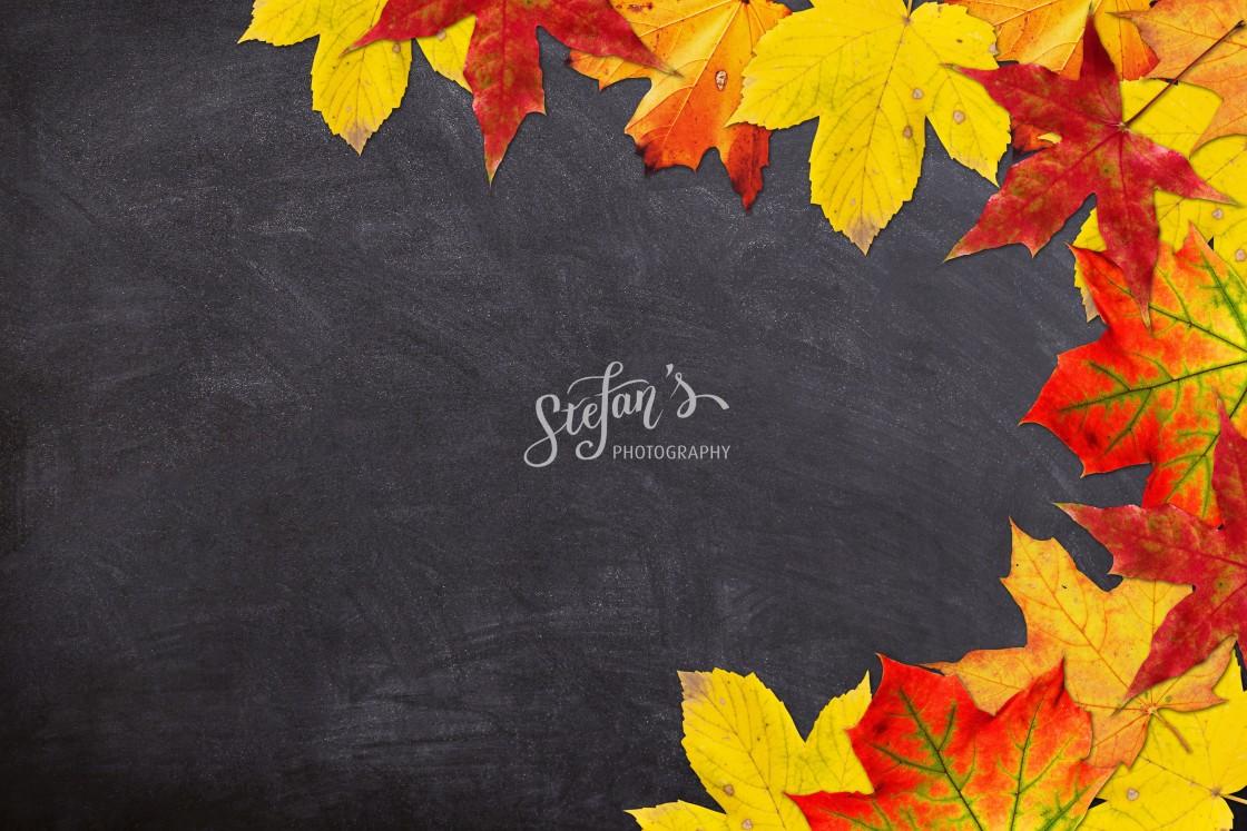 """""""autumn leaves on slate"""" stock image"""