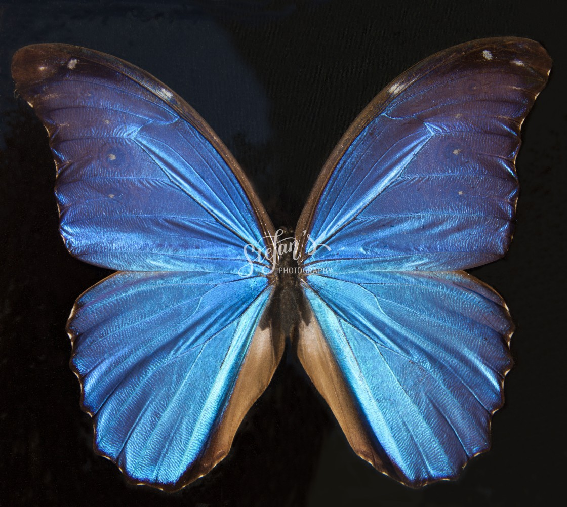 """""""exotic butterfly"""" stock image"""