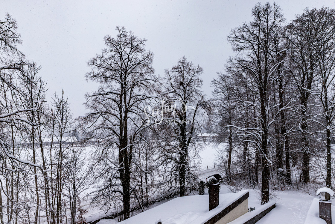 """Snowfall, old trees"" stock image"
