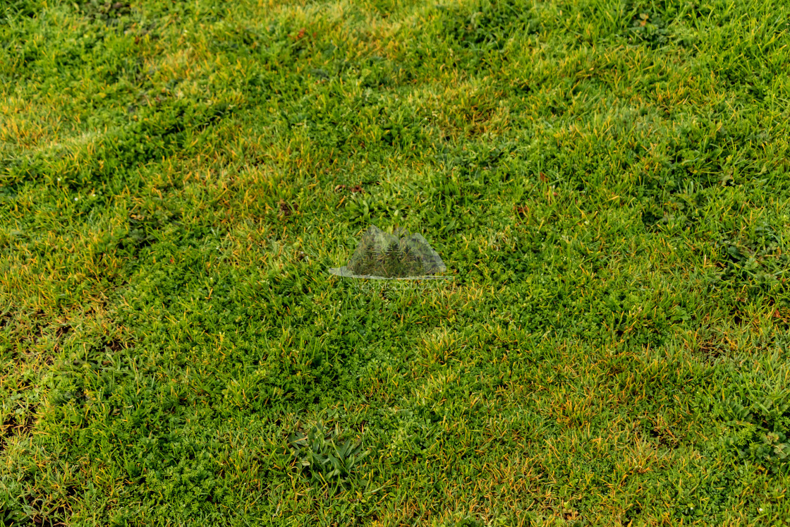 """Green Grass in Florence, Oregon"" stock image"