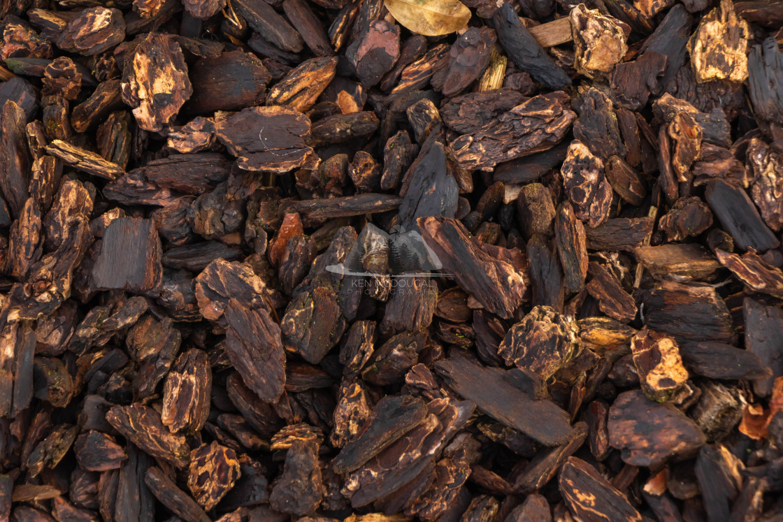 """""""Brown Wood Chips"""" stock image"""