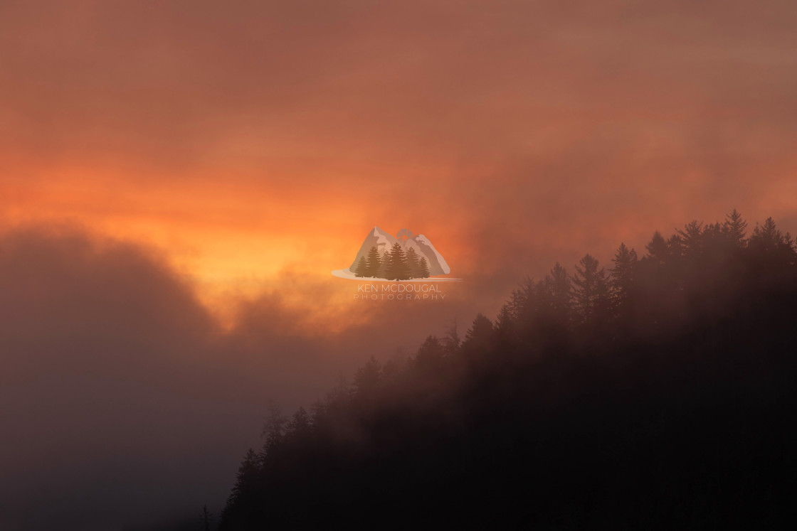 """Sunrise Light in Fog"" stock image"
