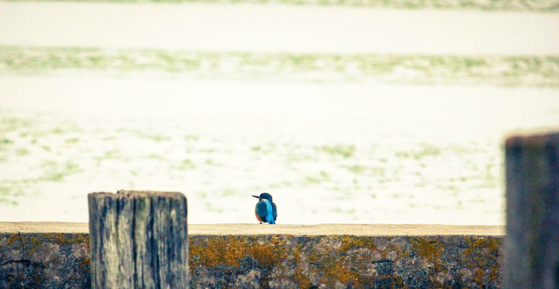"""Kingfisher 01 - HDR"" stock image"
