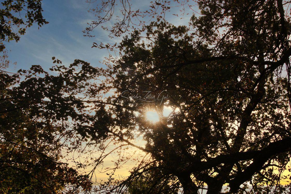 """""""Good morning sunshine"""" stock image"""