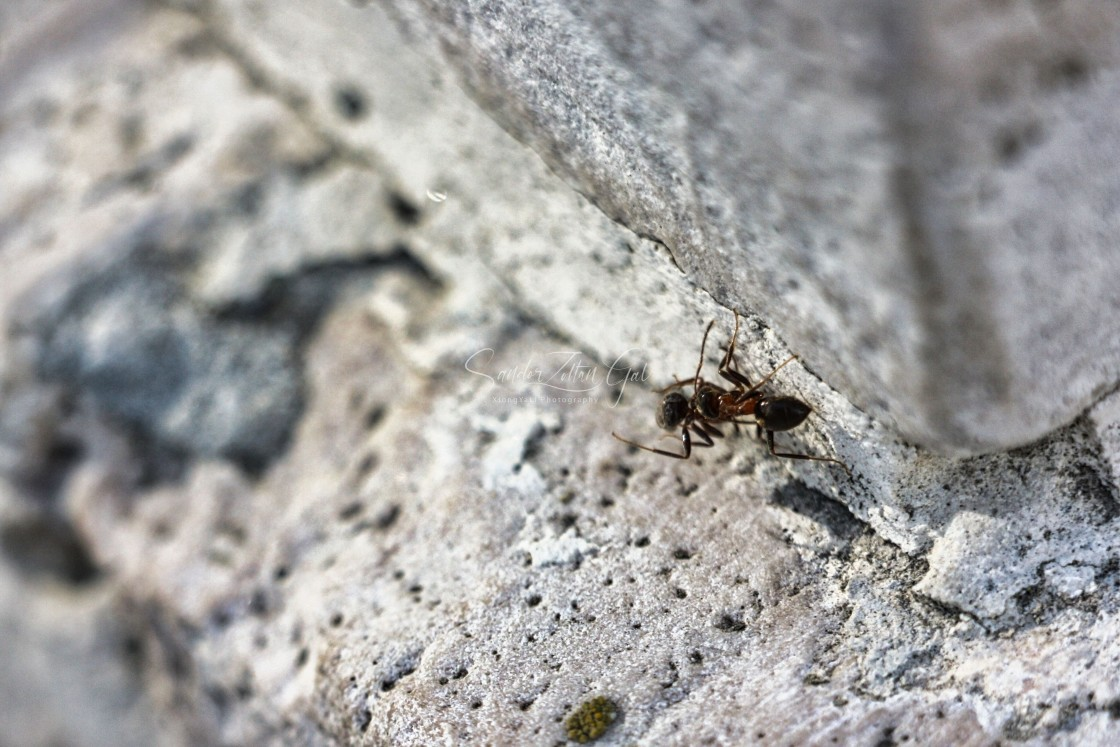 """""""Ant and its prey"""" stock image"""