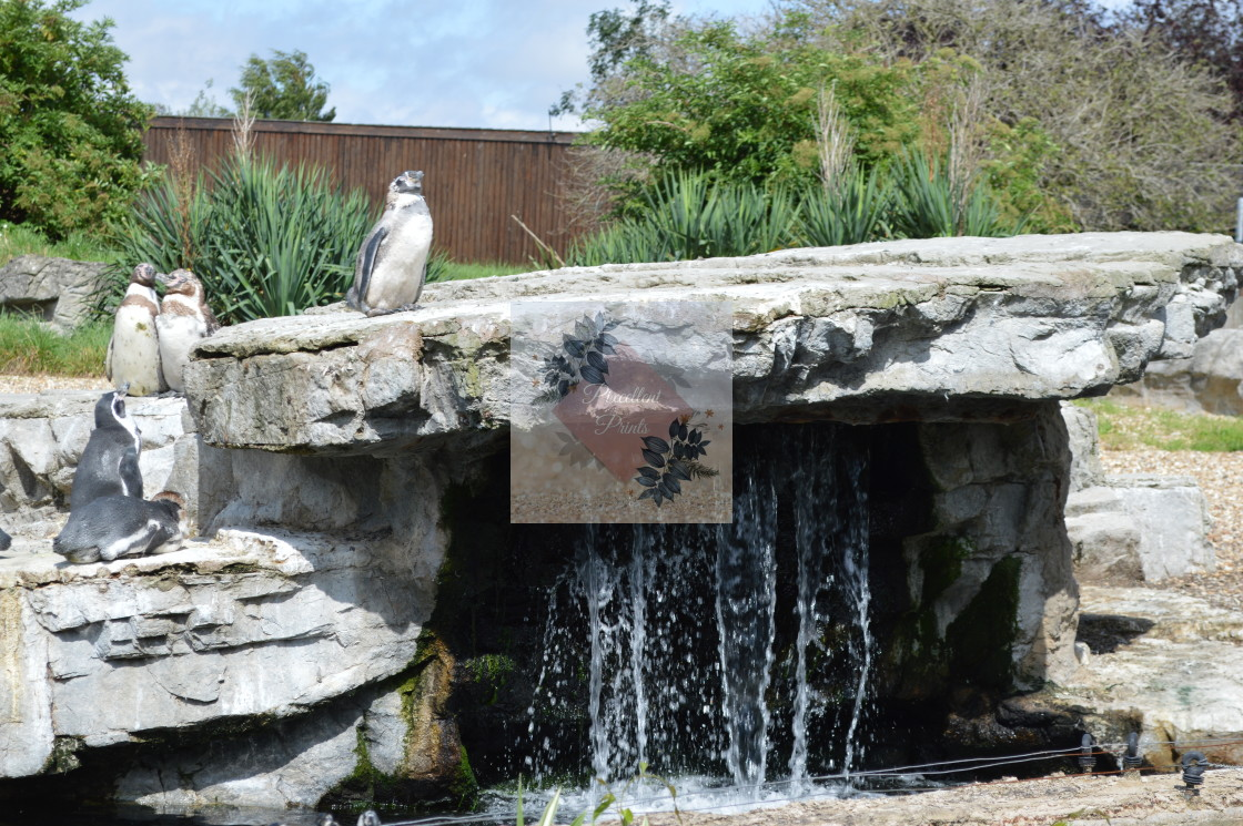 """Penguins Rock"" stock image"