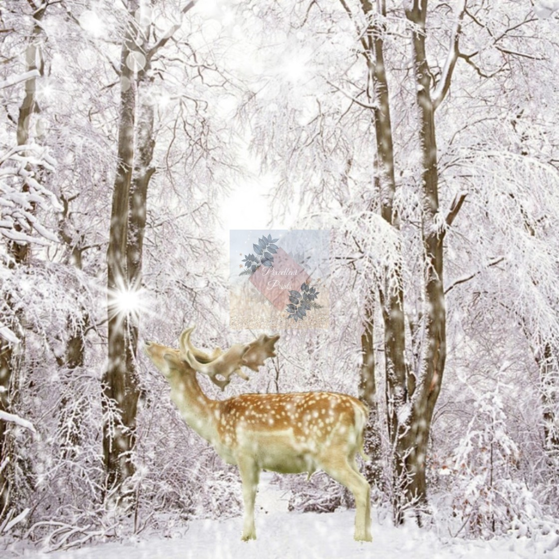 """Stag, snow and sparkle"" stock image"
