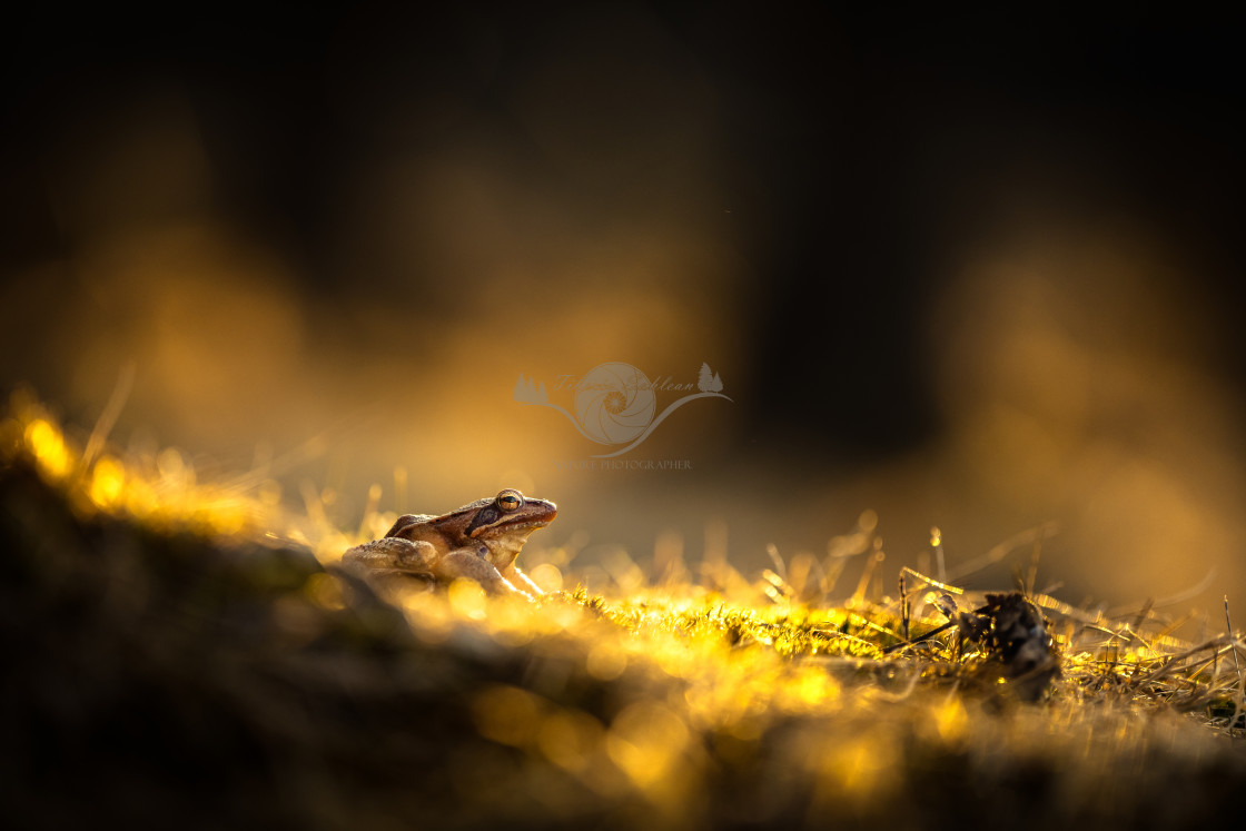 """A frog in the dark"" stock image"