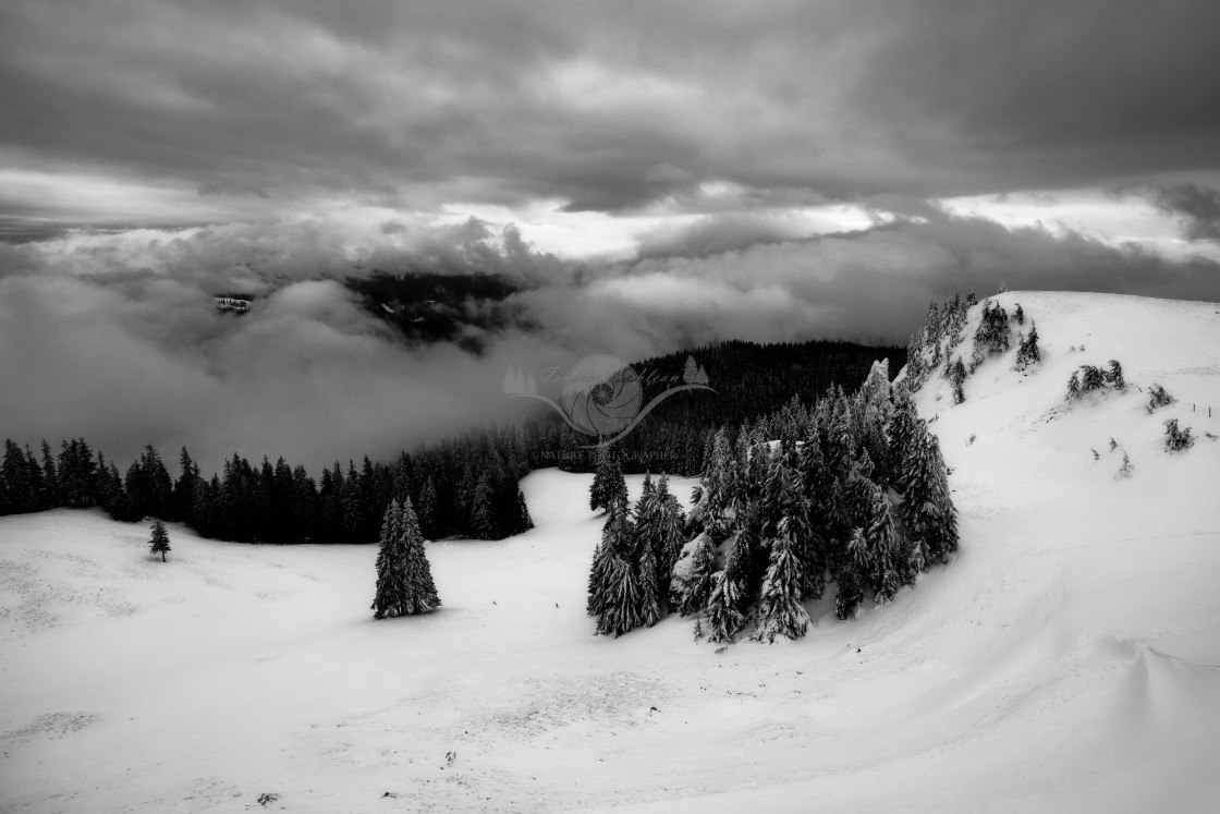 """Winter in the Carpathians"" stock image"