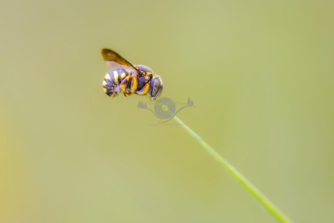 """""""Small bee"""" stock image"""
