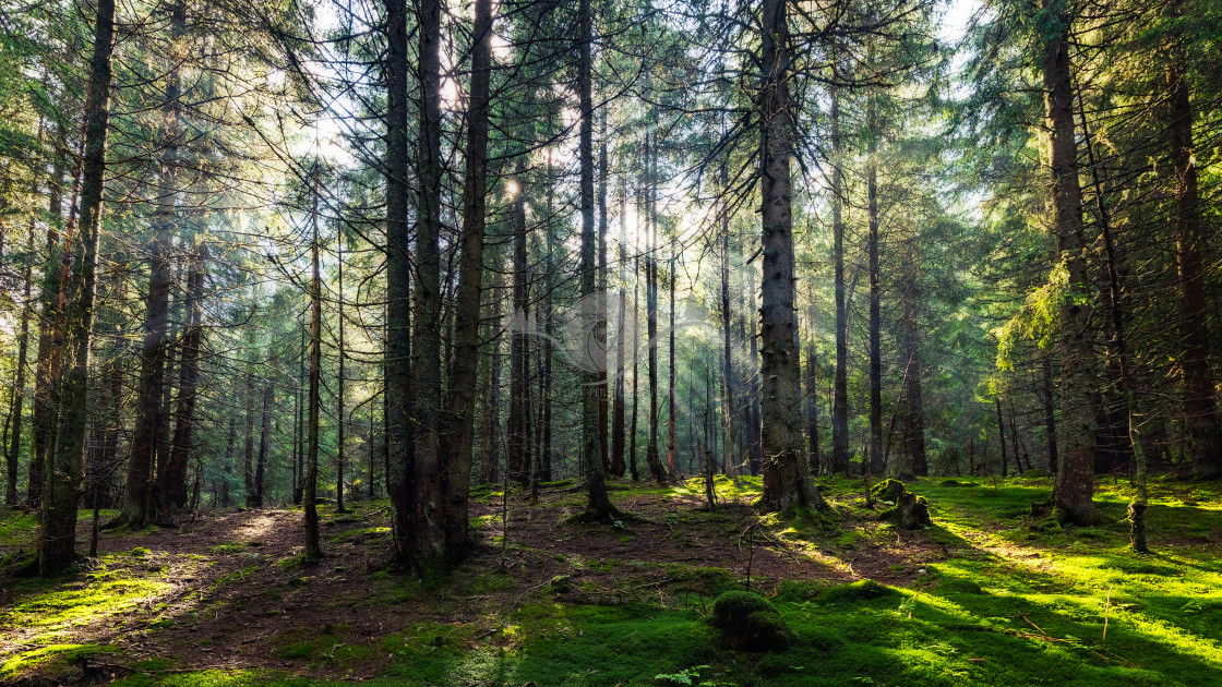 """""""Fairy forest"""" stock image"""