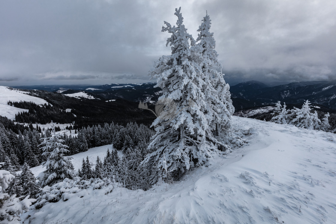 """Snow storm"" stock image"