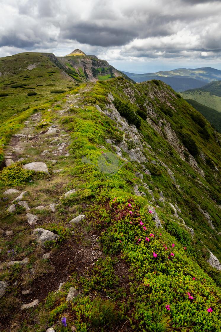 """Pietrosu Peak, Calimani Mountains"" stock image"