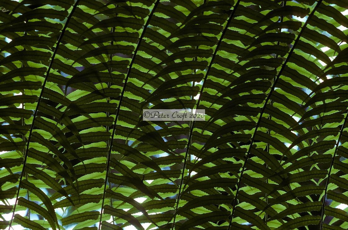 """Fern pattern, Queensland, Australia."" stock image"