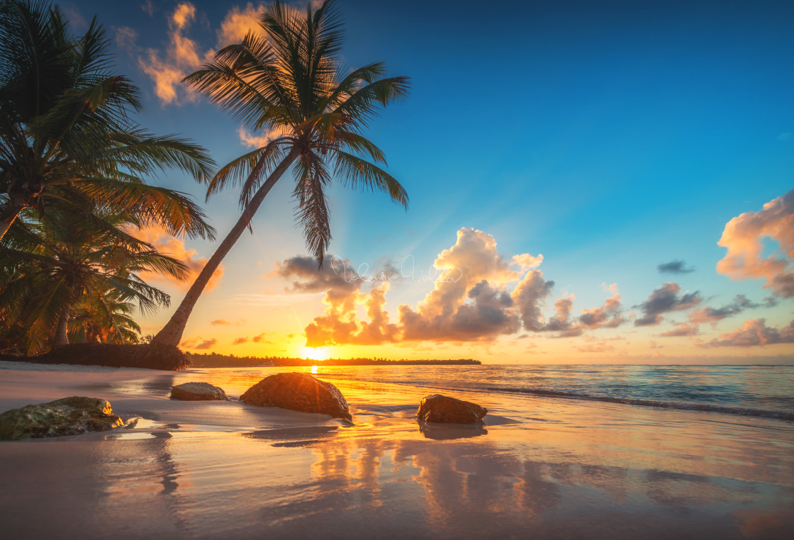 """Palm and tropical beach in Punta Cana, Dominican Republic"" stock image"