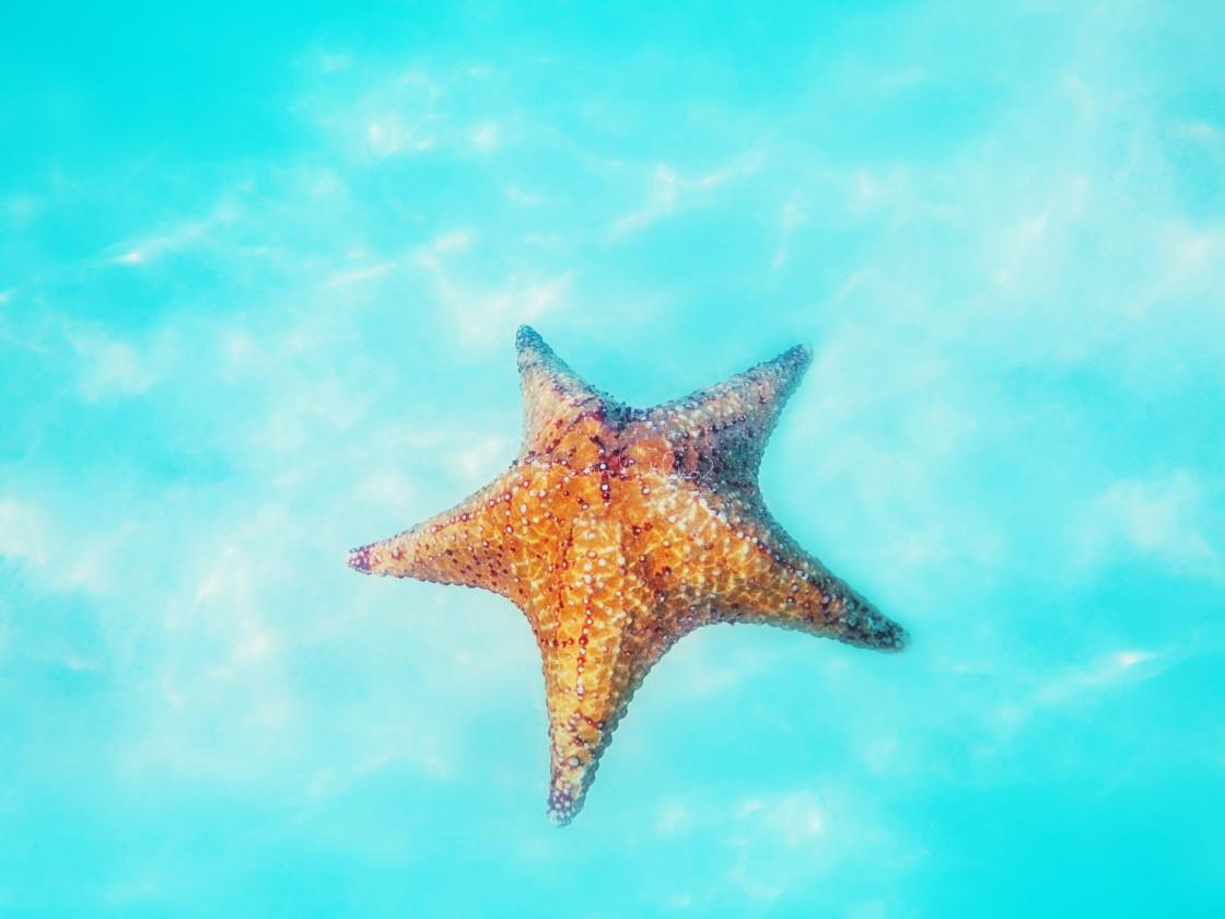 """Starfish underwater over white sand in Caribbean sea. Tropical b"" stock image"