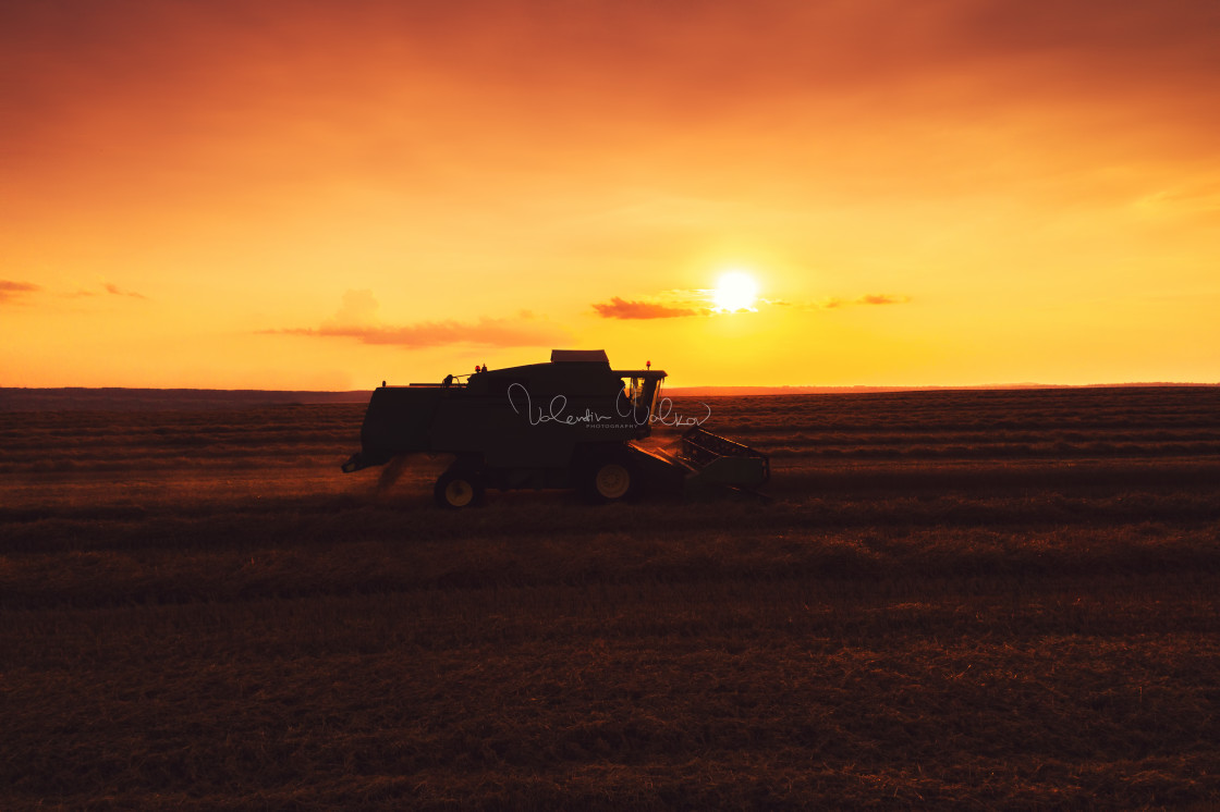 """Combine harvester machine working in a wheat field at sunset."" stock image"