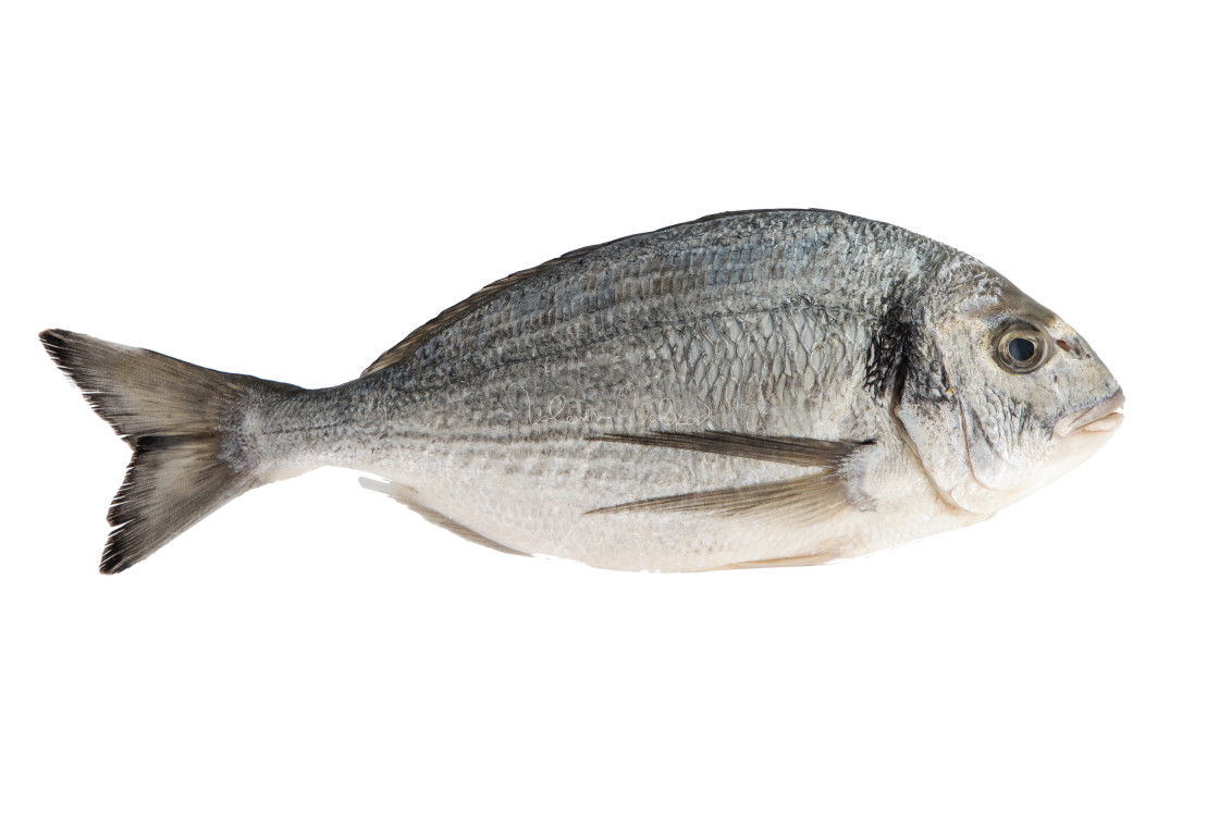 """Fish isolated on the white background"" stock image"
