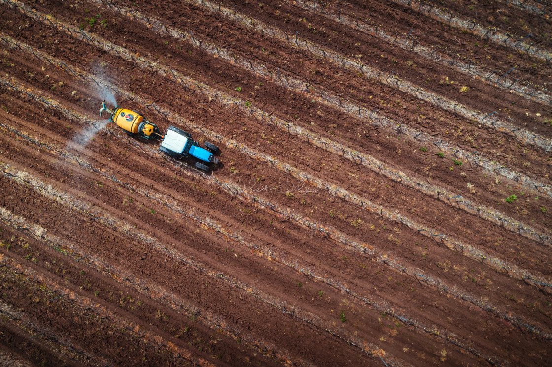 """""""Aerial view of tractor spraying vineyard with fungicide."""" stock image"""
